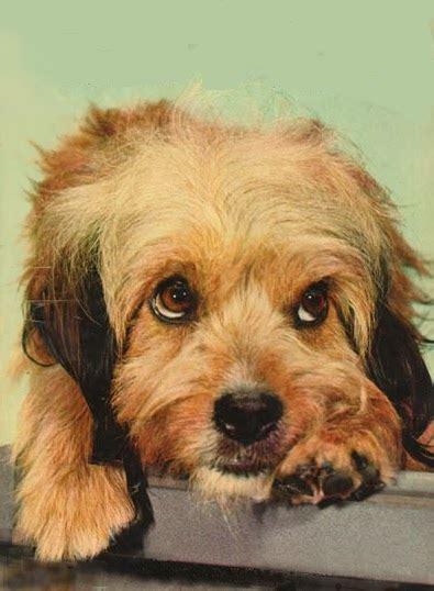 Most Famous Dogs