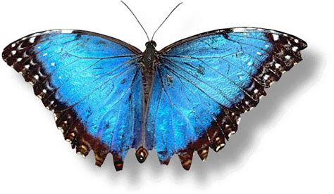 Click It Get It: Butterfly Wallpapers