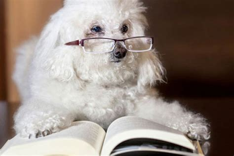 25 Fun and Fascinating Dog Facts – American Kennel Club