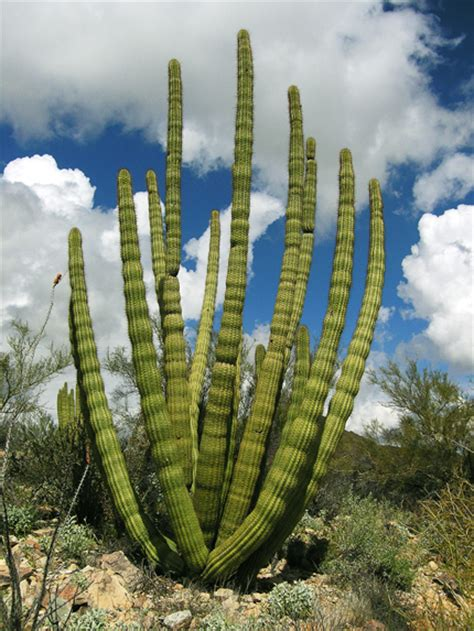 News | General | Endemic plants and trees from Baja