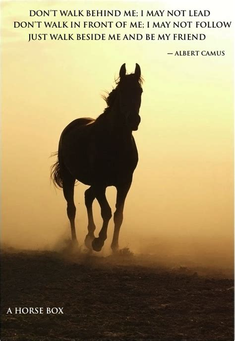 Horses Quotes And Saying At Sunset