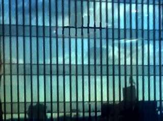 Observational Poems : Downtown Diptych : DU Poetry