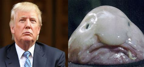 21 Pictures That Totally Look Like Donald Trump