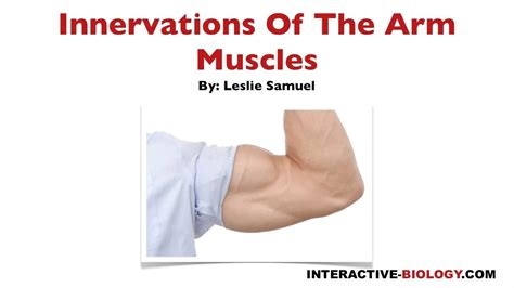 097 Innervations Of The Arm Muscles - YouTube