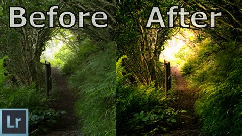 Nature / Forest Photography Editing in Lightroom
